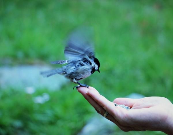 bird and me