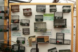 cages for live bait birds